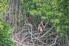 Boys in a Jungle