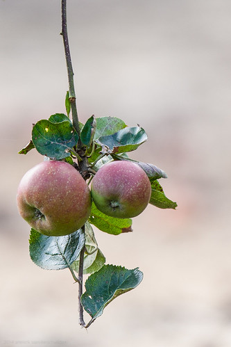 Apples and Pears-22.jpg