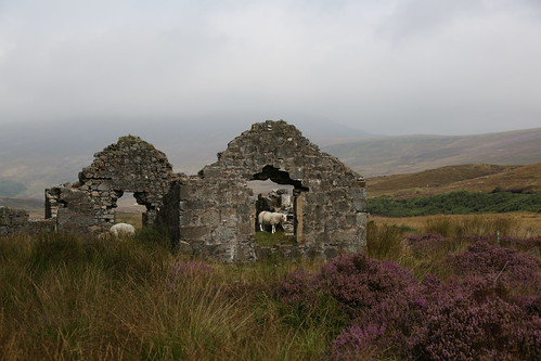 ireland landscape ruins scenery sheep heather wicklow wicklowgap
