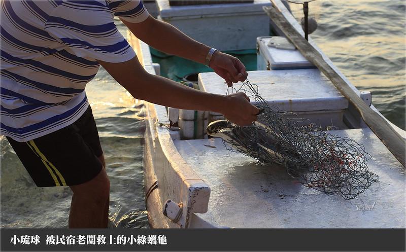 小琉球被民宿老闆救上岸的小綠蠵龜