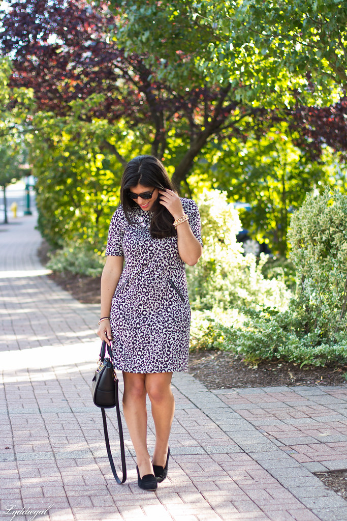 leopard dress, black bag, ferragamo pumps-2.jpg