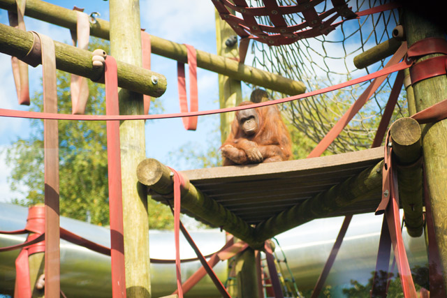 Oshine Monkey World in Dorset