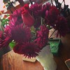 Chrysanthemums & roses #hantzhouse