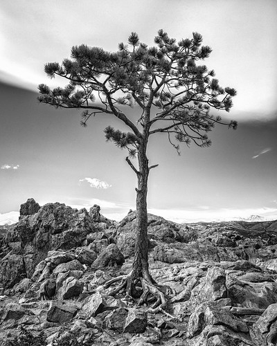 flagstaff tree colorado lone boulder rock blackandwhite markheine mountain
