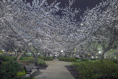 Lower Senate Park