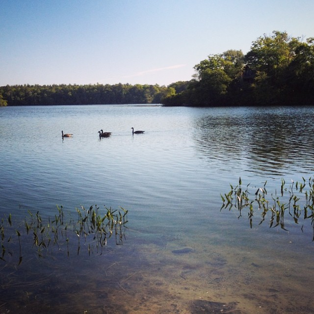 Morning Swim #newengland Playing with the upgraded IG app