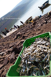 Dried fishes | by Akbar - Web Designer and Freelance Photographer