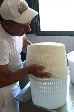 pecorino turning 3