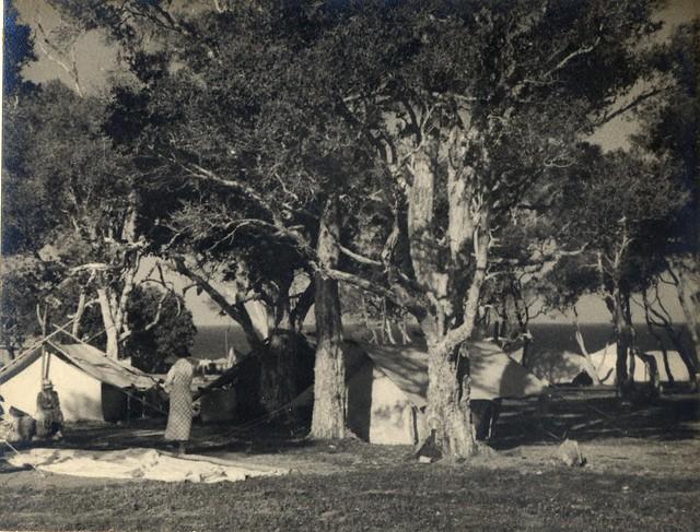 'Camps at Tuggerah' RAHS/Osborne Collection