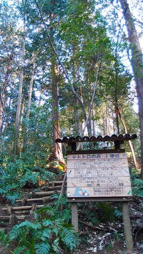 龍貓森林第1號地。攝影:溫于璇