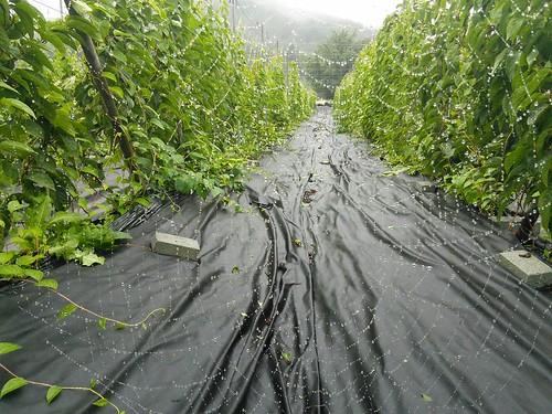 화북초 | 시골집 풍경
