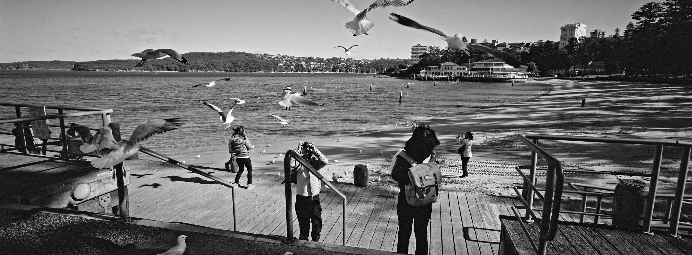 Seagulls Attack!