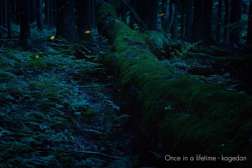 倒木を照らす