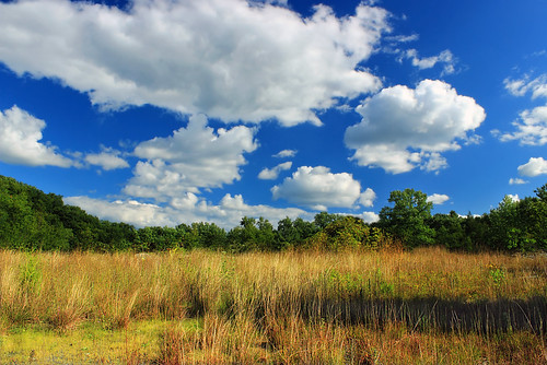 trees summer sky field grass clouds landscape pennsylvania meadow cumulus creativecommons northamptoncounty plainfieldtownshiptrail plainfieldtownshiprecreationtrail