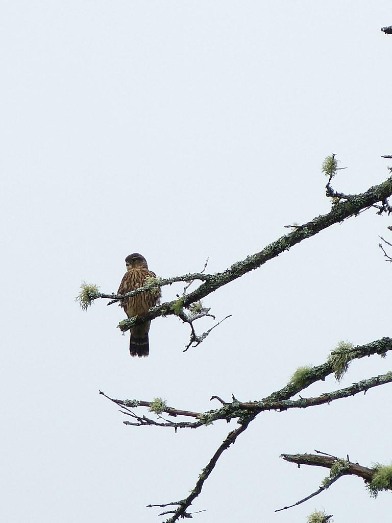 bird and hawks essay