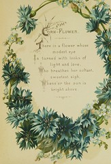 """Image from page 28 of """"The Artistic language of flowers"""" (1888)"""