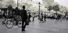 Avenue des Champs Elysées ~ Urban Chronicles ~ Paris ~ MjYj