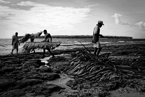 people white black leaves island documentary palm wala roofing rano vanuatu