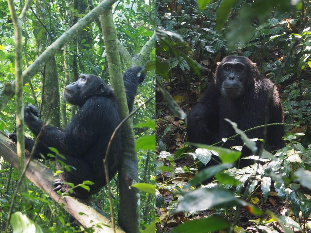 simpanssi3