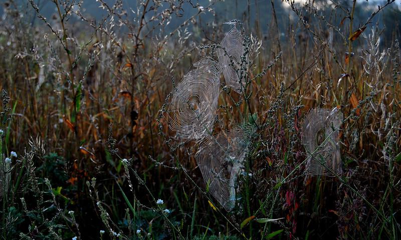 magic spiderweb in morning