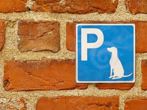 skåne europa europe schweden hund parkplatz mauer 1000views scandinavien lumixphotographer donbello panasonicphotographer panasonicfz150 lumixfz150 sommer2014 reinhardbellmann slottsvaneholm donbellophotography