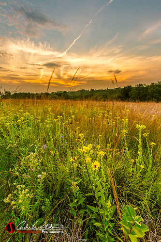 sunset orange flower green nature field yellow wisconsin clouds forest canon landscape weeds unitedstates trail waukesha wildflowers prairie wi naturetrail landscapephotography retzernaturecenter discoverwisconsin travelwisconsin 5dmarkiii