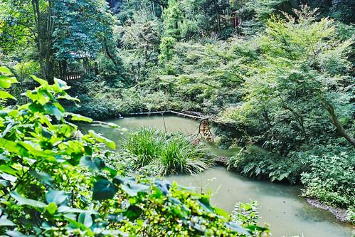 Koyurugi pond 08「東小磯山中 小淘綾の池」