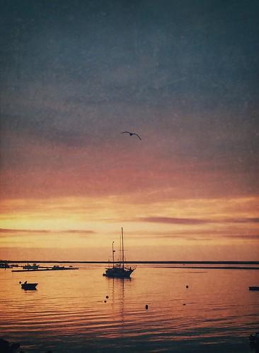 sea sunrise boat seagull