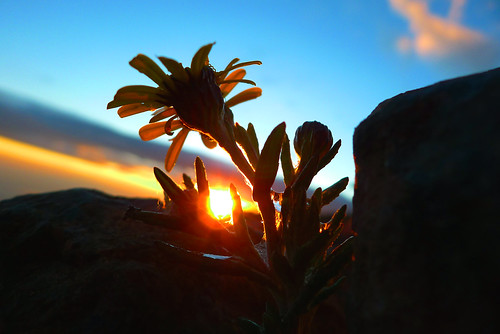 sunset flower kilimanjaro tanzania sonnenuntergang afrika karanga
