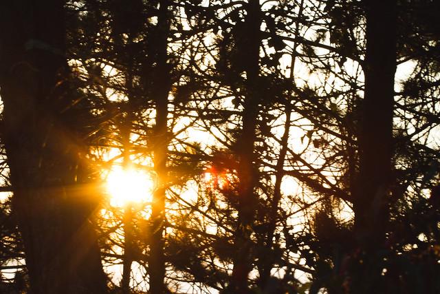 [175] Setting Sun
