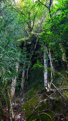 武界林道的棧橋遺跡,圖片攝影:徐嘉君。