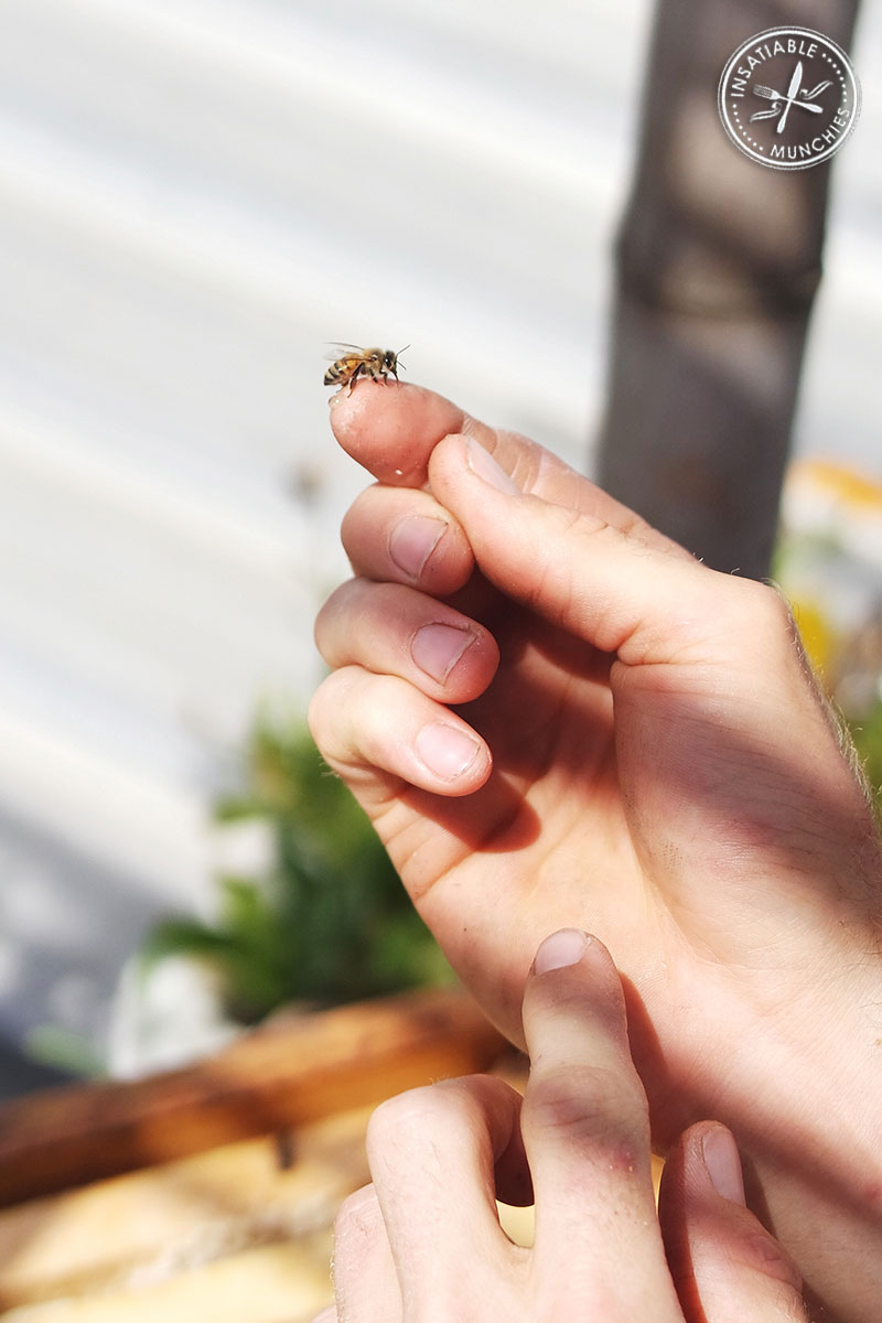 A bee rests gently on Jack's pointed finger