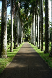 Image of Botanical Garden. mauritius sirseewoosagurramgoolambotanicalgarden pamplemousses