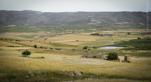 verde countryside natura campagna sicily campi mineo agricoltura giuseppedamico nikond3 nikkor2470 calatino
