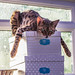 Lazy cat-4 by derena_d.