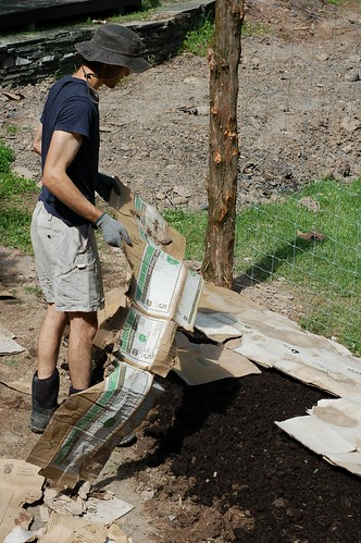 Rahm putting down a layer of cardboard to plant the sweet potato slips in by Eve Fox, the Garden of Eating, copyright 2014