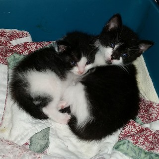 Foster kitties. Have their mother here, too ~ absolutely the friendliest cat I have ever met!