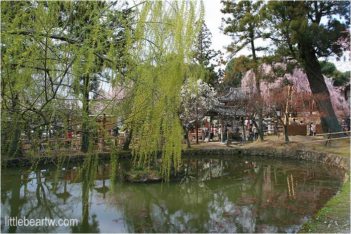 奈良公園-23