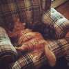 These two are lovebirds, and it's sickeningly adorable. #cats #cute #pets #cuddle #loveanimals #silly #socute #naptime
