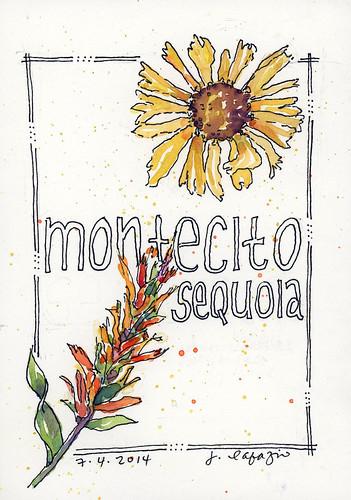 montecito sequoia wild flowers