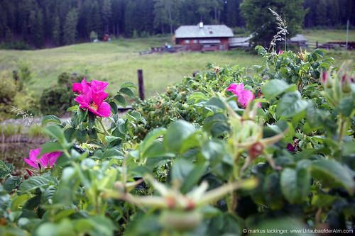 Blick auf die Galgenhütte