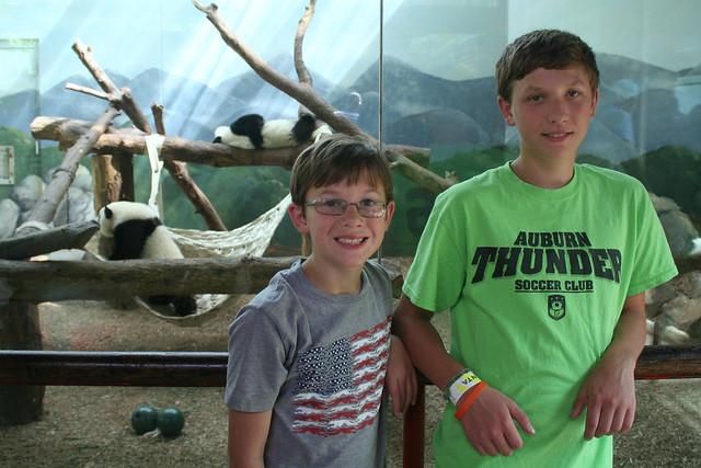 Pandas in Zoo Atlanta