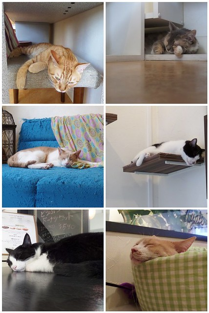 Sleeping Cats Montage