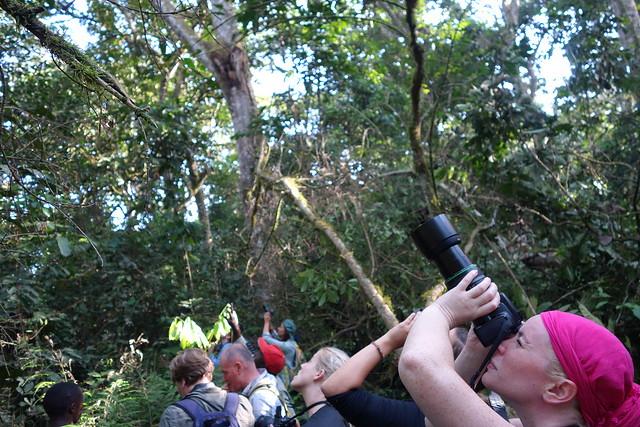 140624 Chimpanzee Hike (15)