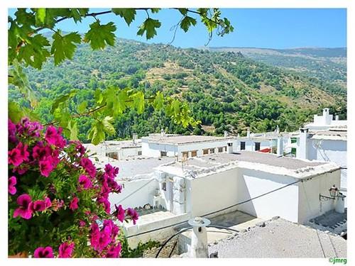 Típicos tejados y chimeneas de las casas de la Alpujarra. Pampaneira.