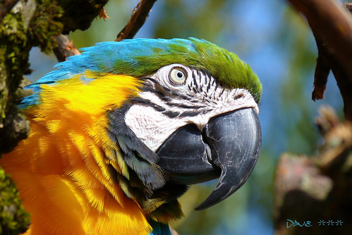 portrait nature beauty sunshine closeup dave colorful wildlife vivid parrot delight lovely ara