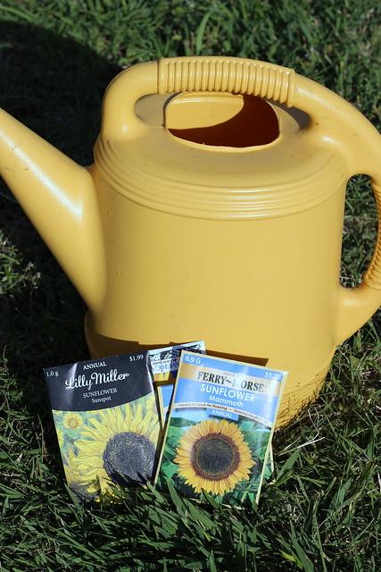Sunflower House 1