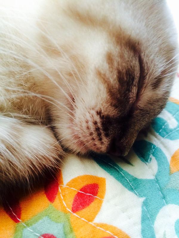 Pip, Sleeping