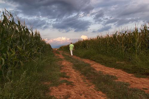 road sky man nature clouds corn country greece fields drama makedonia ελλάδα σύννεφα καλαμπόκια δρόμοσ ουρανόσ δράμα μακεδονία χωράφι αγροτικόσ άντρασ