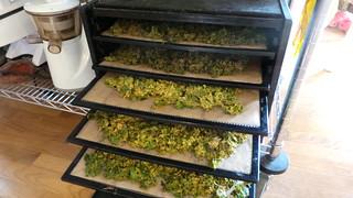 Kale Chip Extravaganza
